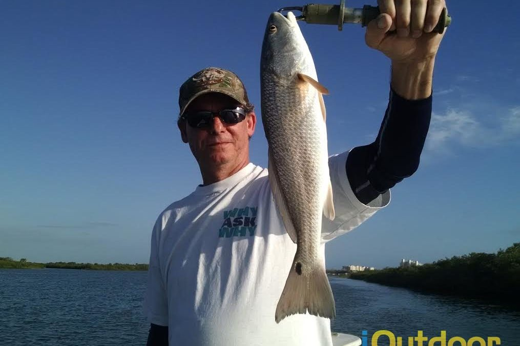 Redfish In Ponce Inlet